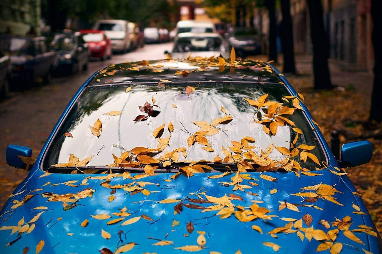 feuilles voiture